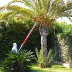 Palm Weevil treatment