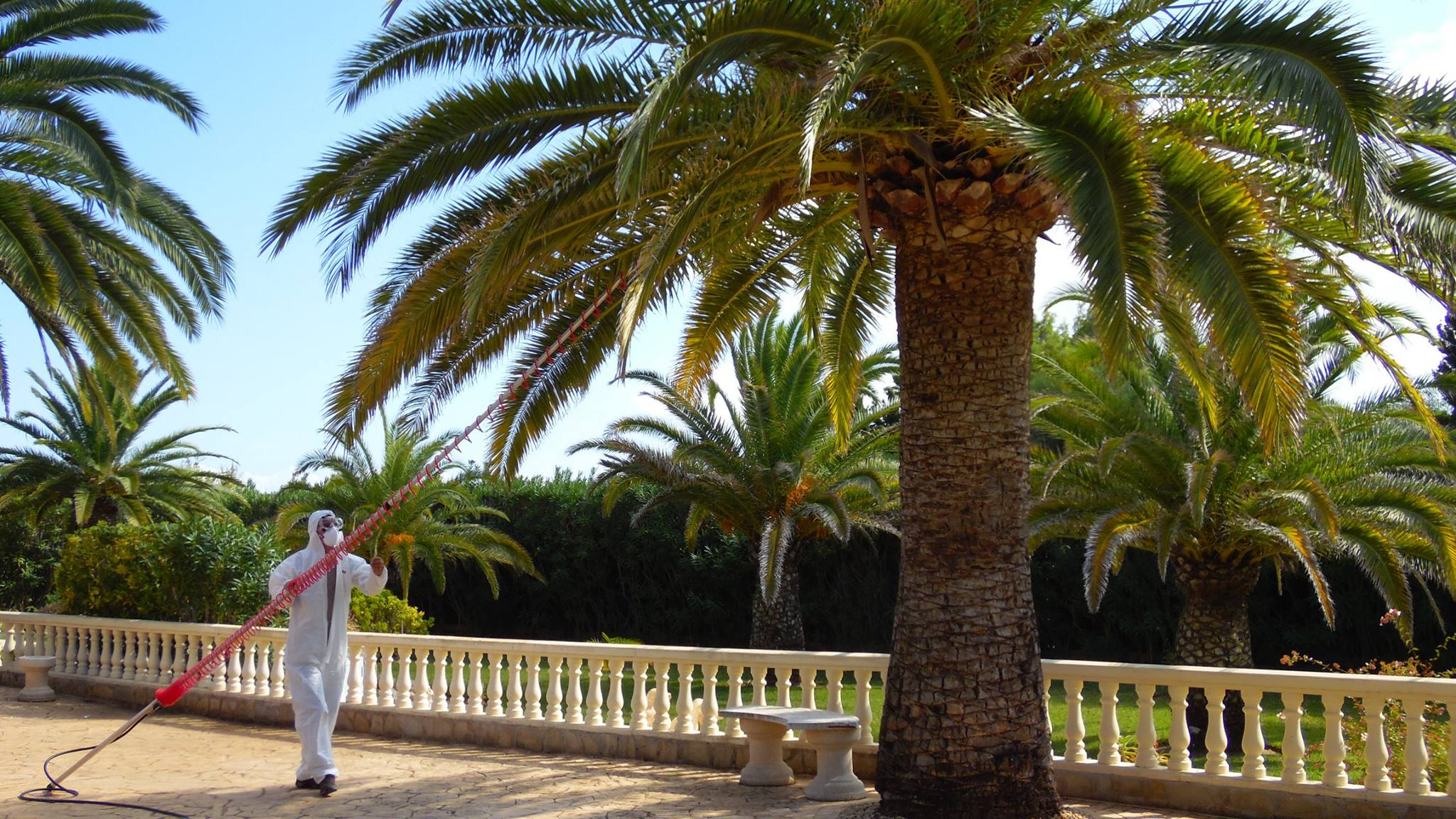 Palm Weevil Treatment Javea